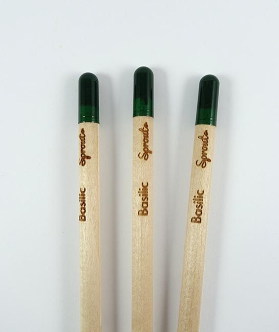 crayon-basilic