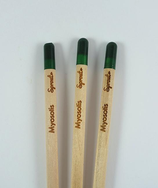 crayon-myosotis